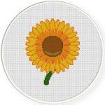 Sun Flower Illustraition