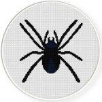 Spider Illustraition